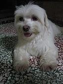 好多狗:IMG_0125.JPG