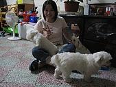 好多狗:IMG_0126.JPG