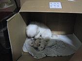 好多狗:IMG_0128.JPG