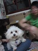 好多狗:IMG_0129.JPG