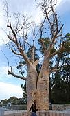 Perth-Kings Park:DSC_6991.jpg