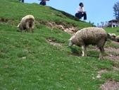 清境農場~:1463763507.jpg