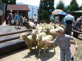 清境農場~:1463763510.jpg