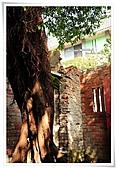 剝皮寮、龍山寺、士林官邸:有fu的老樹