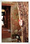 剝皮寮、龍山寺、士林官邸:老樹的護符