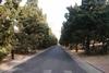 80-15m八大關區塊散步012.jpg