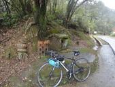 單車照片:DSC04245.JPG