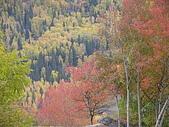 2008新疆北疆之秋(7)-禾木村 :DSCN2551.JPG