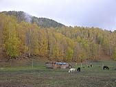 2008新疆北疆之秋(7)-禾木村 :DSCN2593.JPG