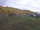 2008新疆北疆之秋(7)-禾木村 :DSCN2596.JPG