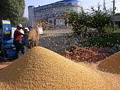2008/9/16新疆北疆之秋(1)-1北京機場 精河 霍爾果斯 賽里木湖 :DSCN1452.JPG