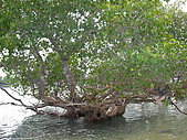 2009年8月峇里島SPA和玩水之旅:DSC00602.jpg