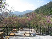 Xuite活動投稿相簿:私房花現-陽明山