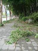 吃與生活:折斷的路樹