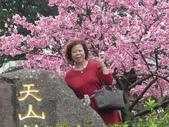 2017年天元宮櫻姿之美:20170205-IMG_3188-陳麗雲.jpg