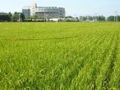 明道大學農場實習:1702611411.jpg