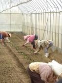 巨農有機農場實習:1598104105.jpg