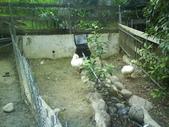 綠盈農場:1716706807.jpg