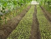 巨農有機農場實習:1598104108.jpg
