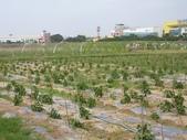 巨農有機農場實習:1598104109.jpg