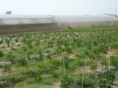 巨農有機農場實習:1598104112.jpg