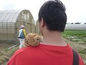 巨農有機農場實習:1598104124.jpg