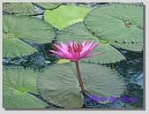 1.28前進Sigiriya:P1390179.jpg