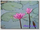 1.28前進Sigiriya:P1390181.jpg