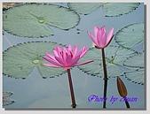 1.28前進Sigiriya:P1390182.jpg