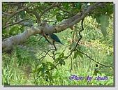 1.28前進Sigiriya:P1390188.jpg