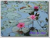 1.28前進Sigiriya:P1390190.jpg