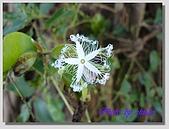 1.28前進Sigiriya:P1390519.jpg
