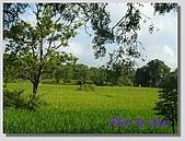 1.28前進Sigiriya:P1390162.jpg