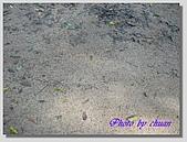 1.28前進Sigiriya:P1390169.jpg