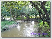 1.28前進Sigiriya:P1390173.jpg