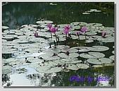 1.28前進Sigiriya:P1390176.jpg
