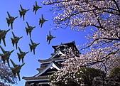 我的相簿:50808Japanese Cherry Blossoms.jpg