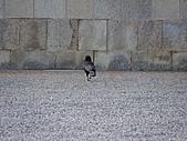 2011京都趴趴走DAY3:DSC05690.JPG