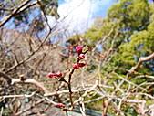 2011京都趴趴走DAY3:DSC05620.JPG