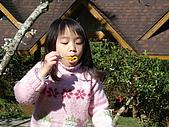 2007台中新社薰衣草森林:DSC00560