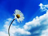 不錯的桌面圖片:%5Bwallcoo%5D_Chrysanthemum_flower_0010.jpg