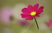 不錯的桌面圖片:Flower_Market_Flower_show_newflower090.jpg
