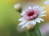 不錯的桌面圖片:digital-flower-phorography-newflower127_wallcoo_com.jpg