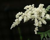 不錯的桌面圖片:digital-flower-phorography-newflower166_wallcoo_com.jpg