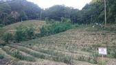 石碇八卦茶園-千島湖:2015-09-06 17.01.02.jpg