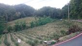 石碇八卦茶園-千島湖:2015-09-06 16.56.54.jpg