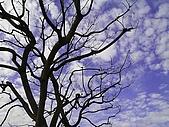 Tree:春初的枯樹與天空成對比