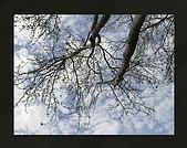 Tree:枯樹與天空
