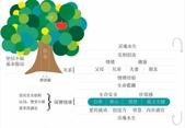 Tree:apple-tree.jpg