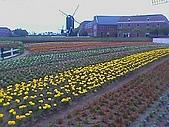 日本九州5日遊:豪斯登堡-鬱金香